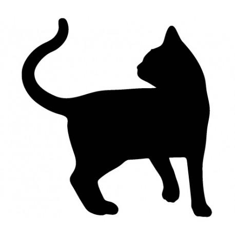 Kissa Latinankielinen Nimi